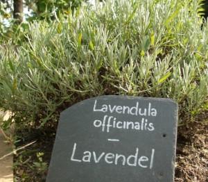 Lavendel - nicht nur in der Küche nützlich.