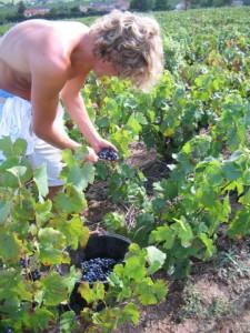 Erntezeit im Beaujolais