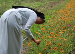 Ringelblumen unterstützen bei der Wundheilung.