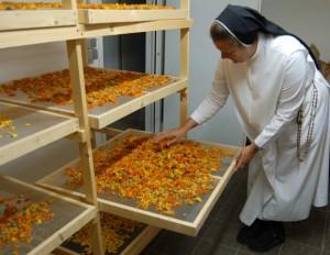 Schonende Trockung der Ringelblumen