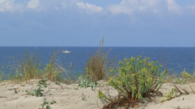 Ein Paradies für Surfer und Austernfans